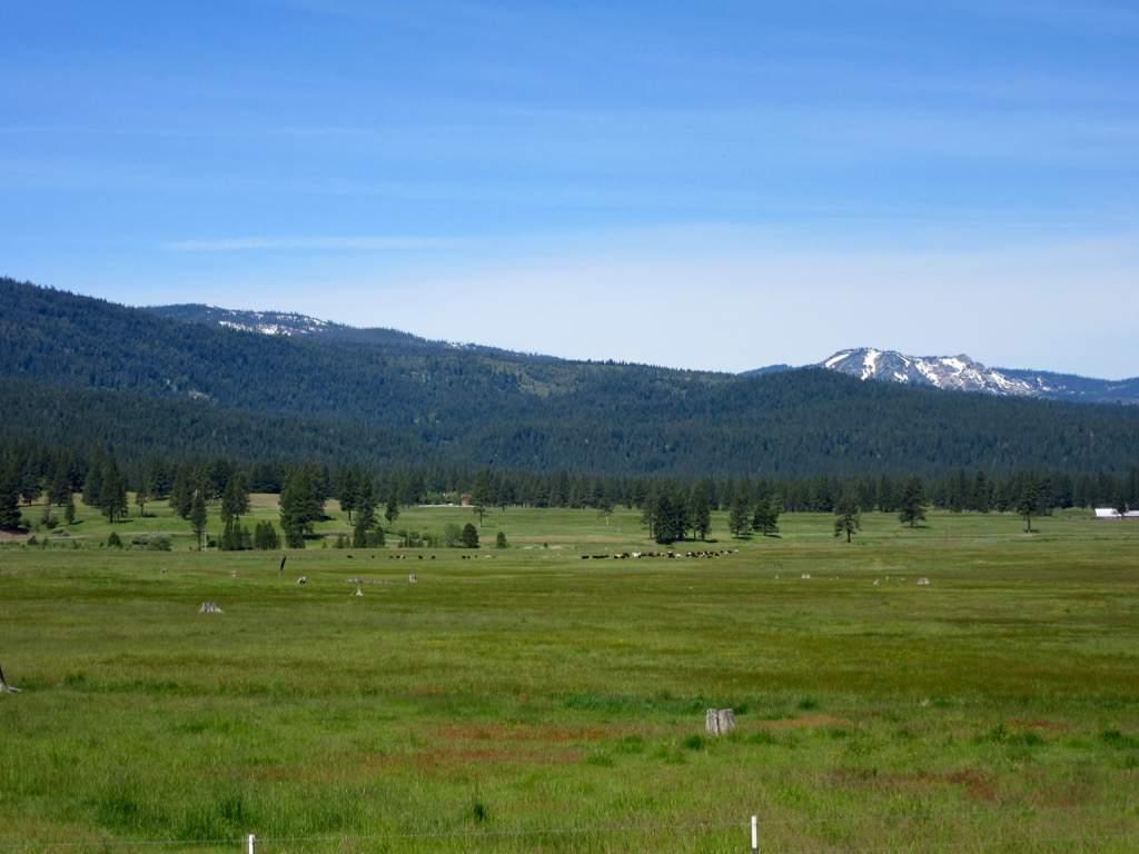 Meadow views 4