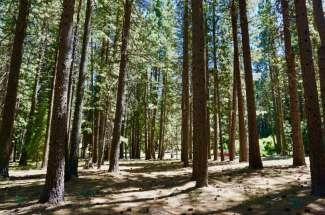 14 Evergreen Circle, Plumas Pines