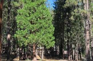 14 Mattole Trail, Graeagle