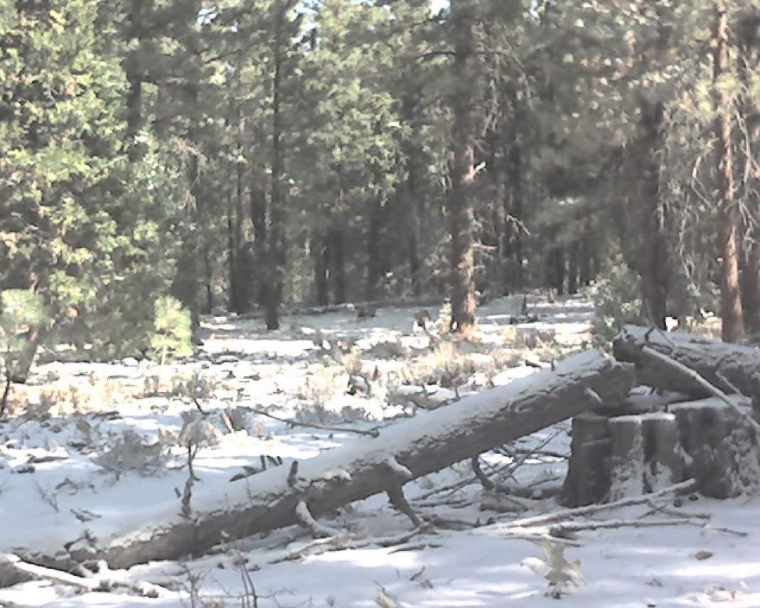 Snowy-Property