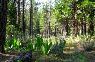 33 Meadowlark Lane