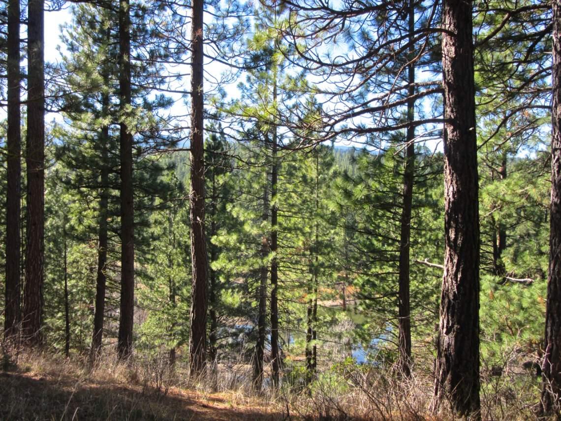 348 Smith Creek Ranch - 2166