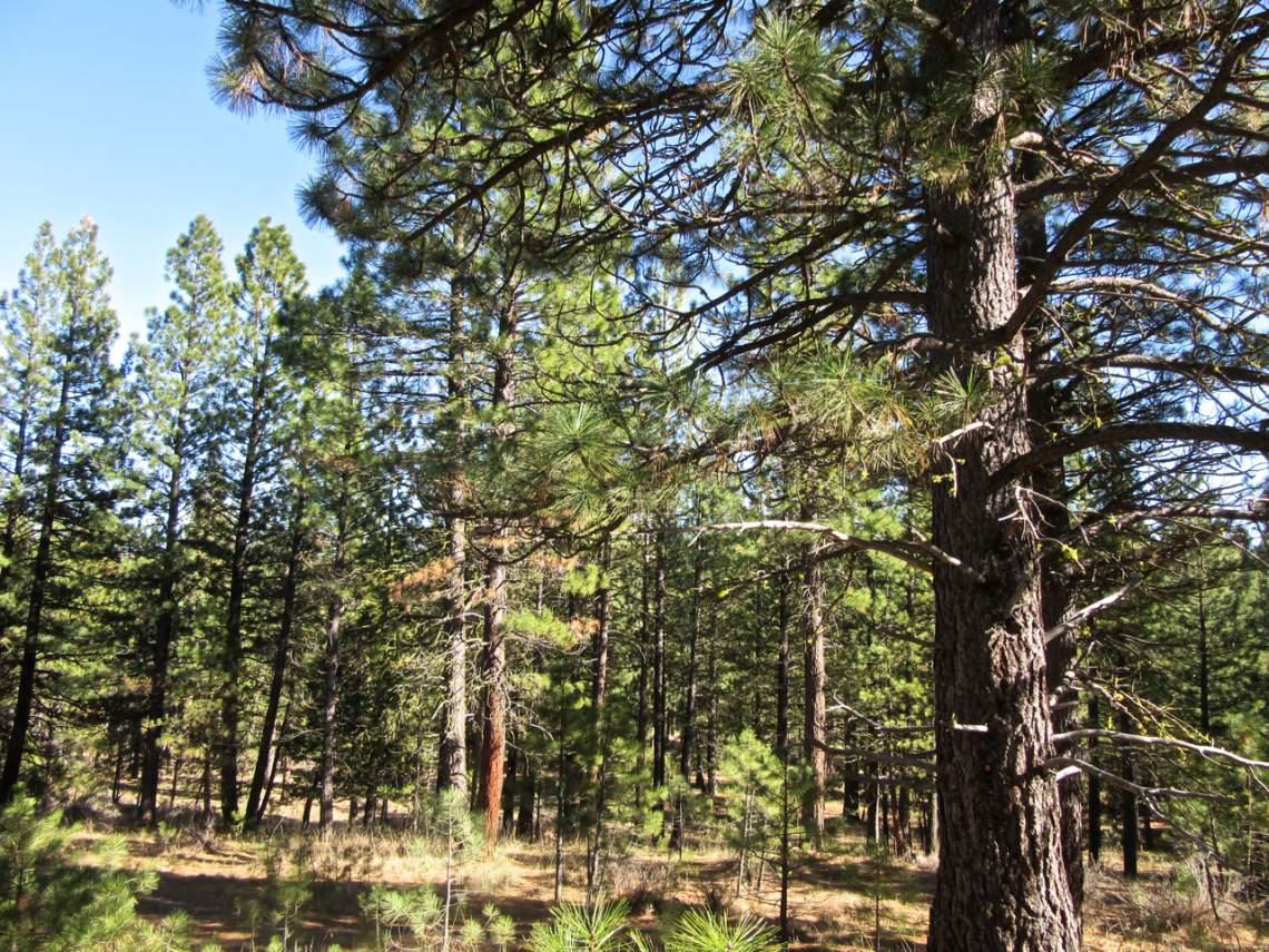 348 Smith Creek Ranch - 2173