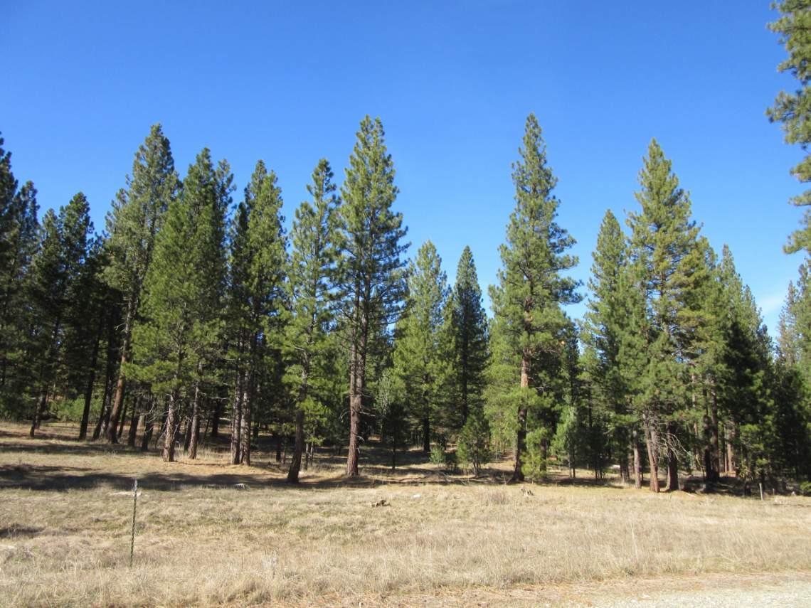 348 Smith Creek Ranch - 2174