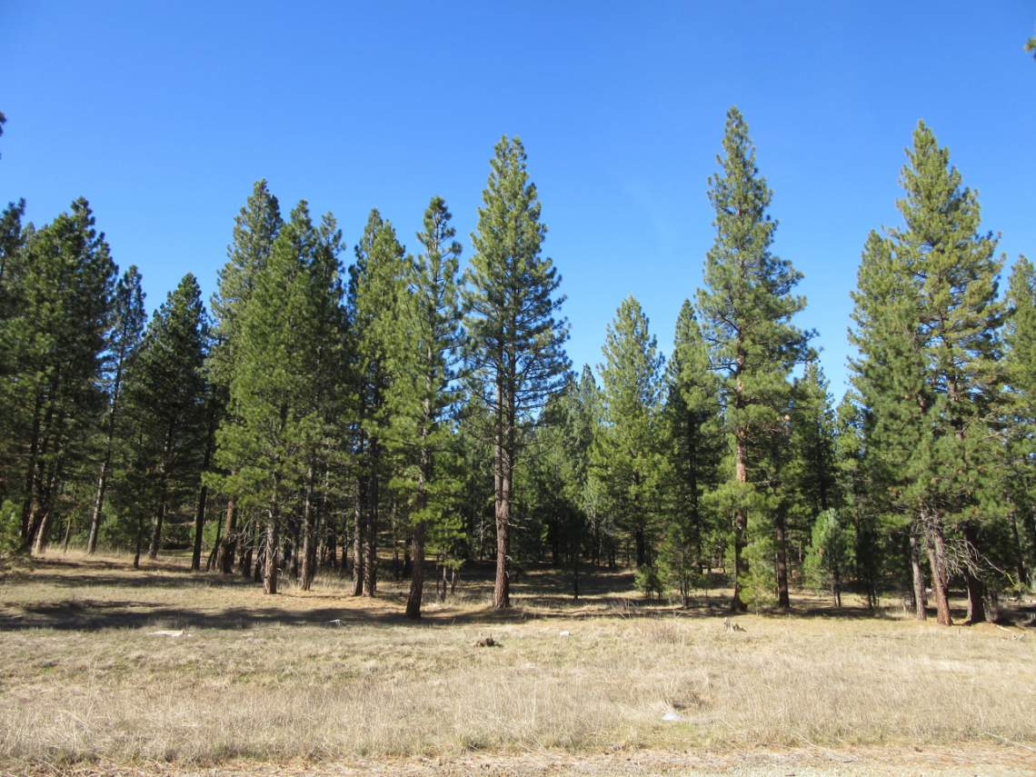 348 Smith Creek Ranch - 2175