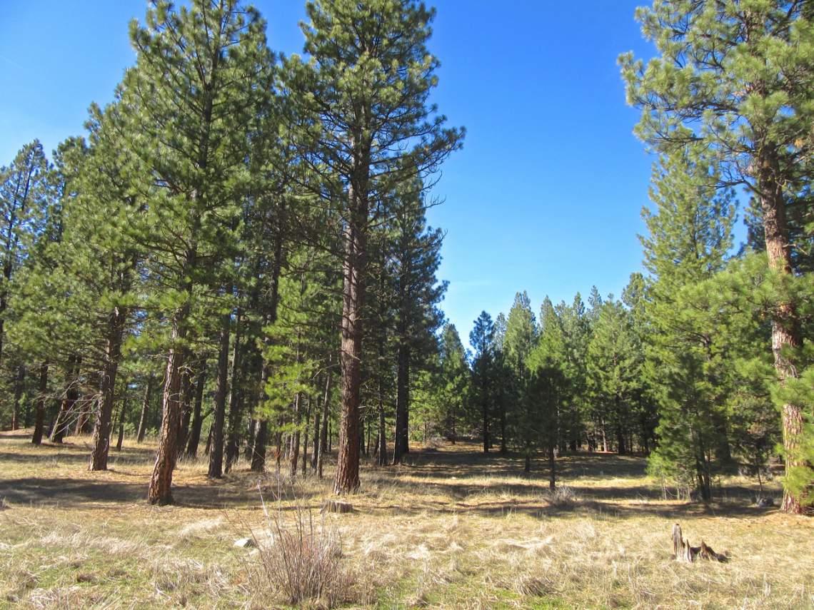 348 Smith Creek Ranch - main