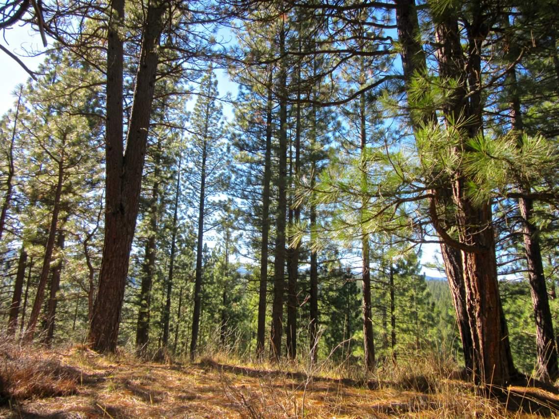 348 Smith Creek Ranch - mtn ridge