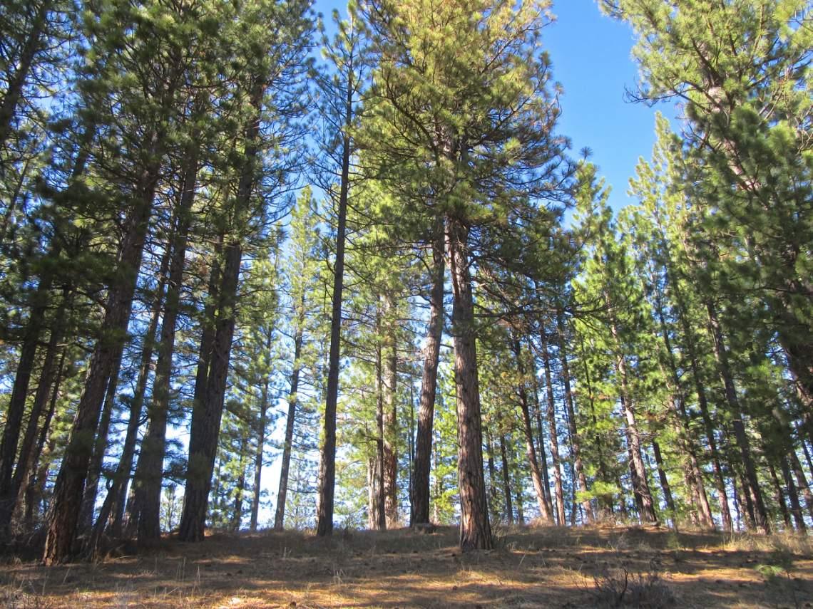 348 Smith Creek Ranch - tall trees