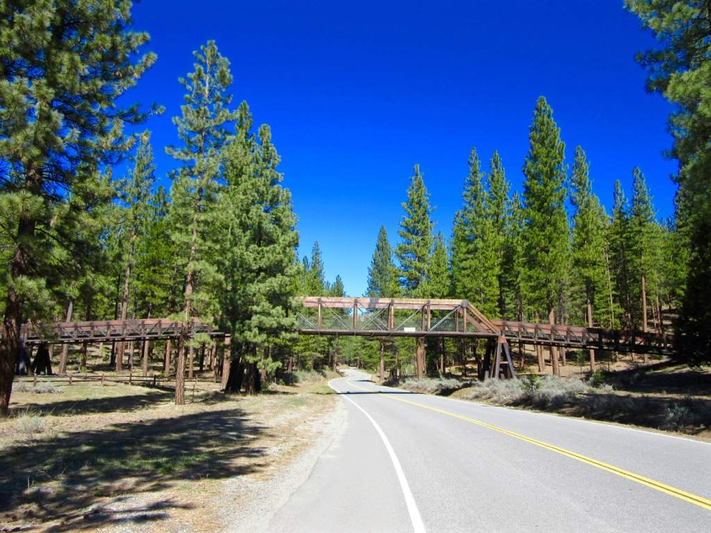 Cart-bridge-over-Grizzly-Rd