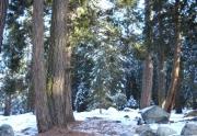yonkalla-trail-002