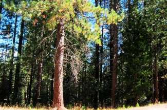 8 Sioux Trail, Graeagle