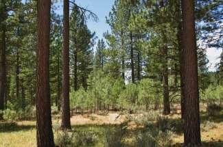851 Valley Ranch Drive, Valley Ranch Estates