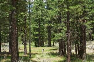 90 Cayden Drive, Valley Ranch Estates