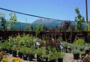 garden-shop-eureka-peak
