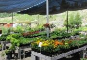 garden-shop-flowers-2