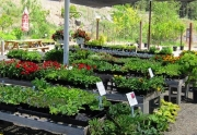 garden-shop-flowers