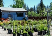 garden-shop-plants-2