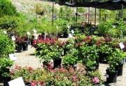 garden-shop-plants-3