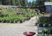 garden-shop-plants